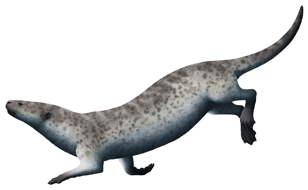 An illustration of an extinct relative of seals. It resembles an otter, with a long flexible body, a long tail, and four short limbs with webbed feet.