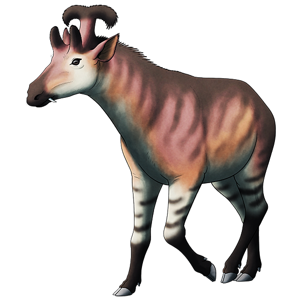 A colored line drawing of an extinct deer-like animal. It has fang-like tusks protruding from the sides of its mouth, a pair of giraffe-like ossicones above its eyes, and a T-shaped handlebar-like crast on the back of its head.