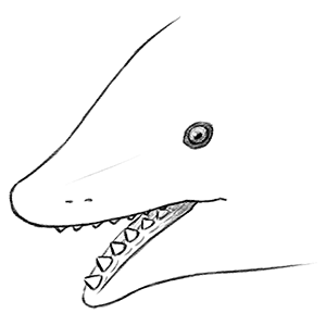 A close up drawing of the head of the extinct shark-like fish Edestus. It has a single central row of large teeth in its upper and lower jaws.