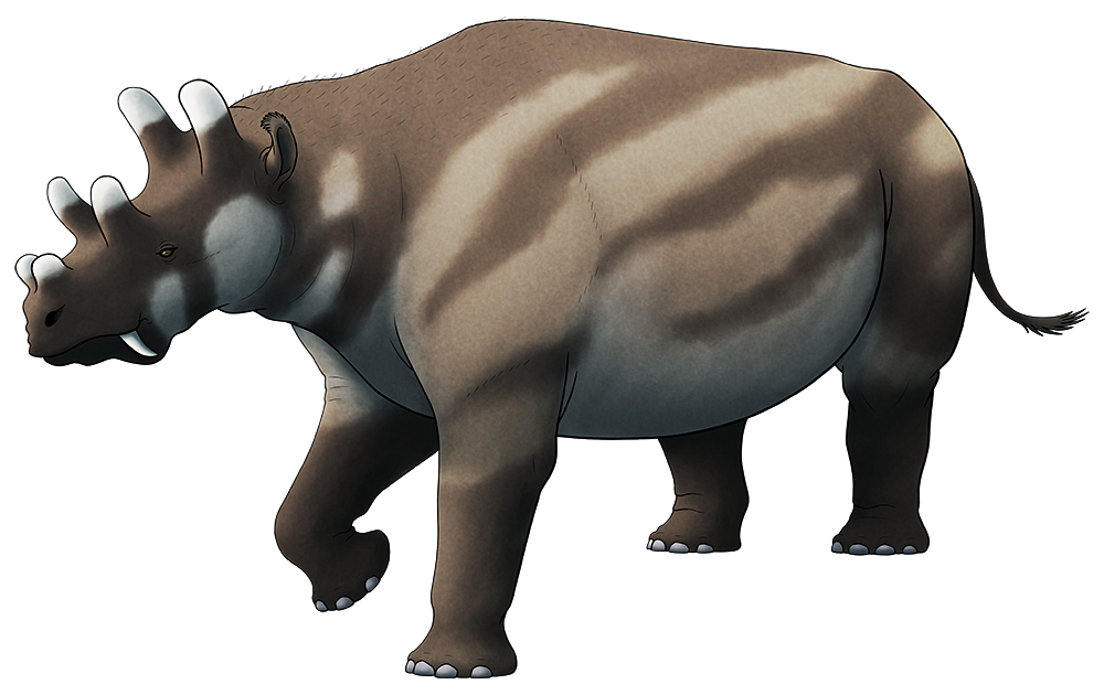 A colored line drawing of an exting rhino-like mammal. It has a concave forehead, sabre-like fangs, and a total of six blunt horns on its head: two at the back of its skull, two over its eyes, and two smaller ones on its nose.