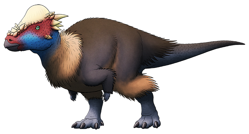 A colored line drawing of an extinct bipedal dinosaur. It has a thick bony dome on its forehead ringed by knobs and spikes, along with a speculative coat of fluffy feathers over most of its body.