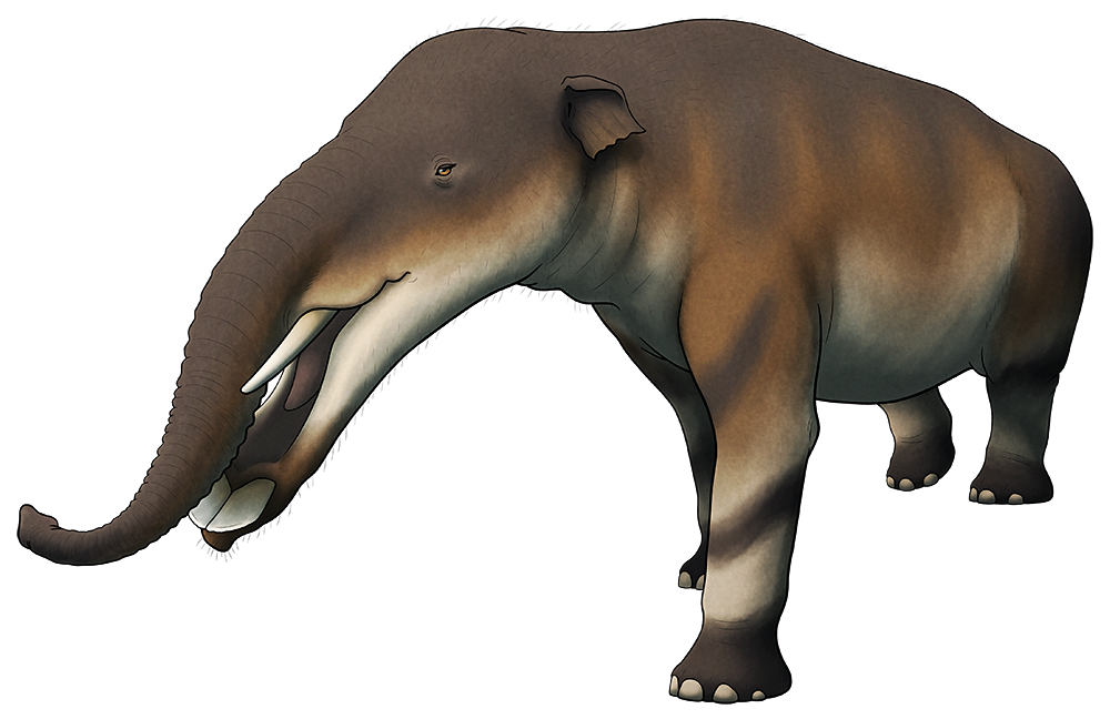 A colored line drawing of an extinct elephant-like animal. It has a very elongated lower jaw with a wide flat shovel-like tip, ending in two flat tusks that resemble buck teeth.