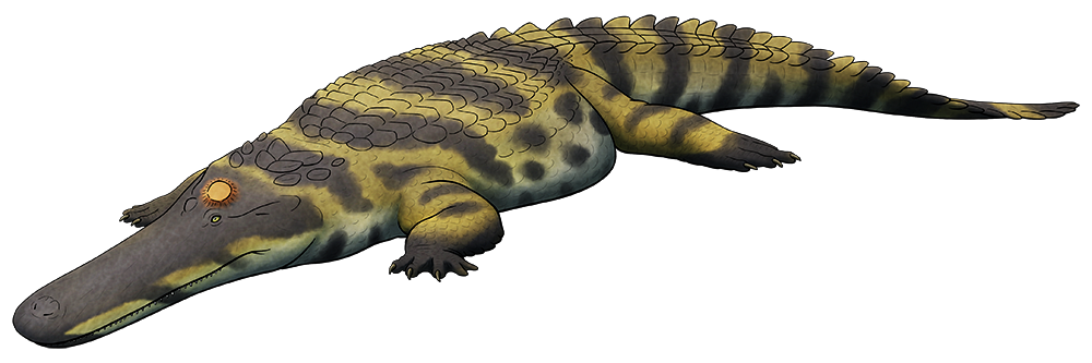 Weird Heads Month #22: Flat Headed Crocs