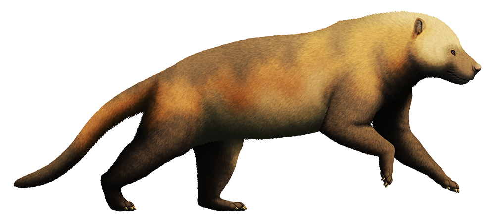 An illustration of a bear-dog, an extinct carnivorous mammal. It resembles a bear, with a chunky body and a long thin tail.