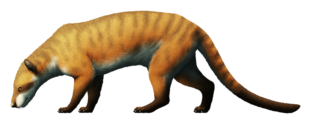 An illustration of a bear-dog, an extinct carnivorous mammal. It resembles a dog or fox with a long thin tail.