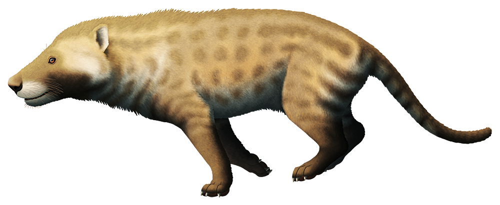 An illustration of an extinct carnivorous mammal. It resembles a dog-hyena, with chunky jaws and a long thin tail.