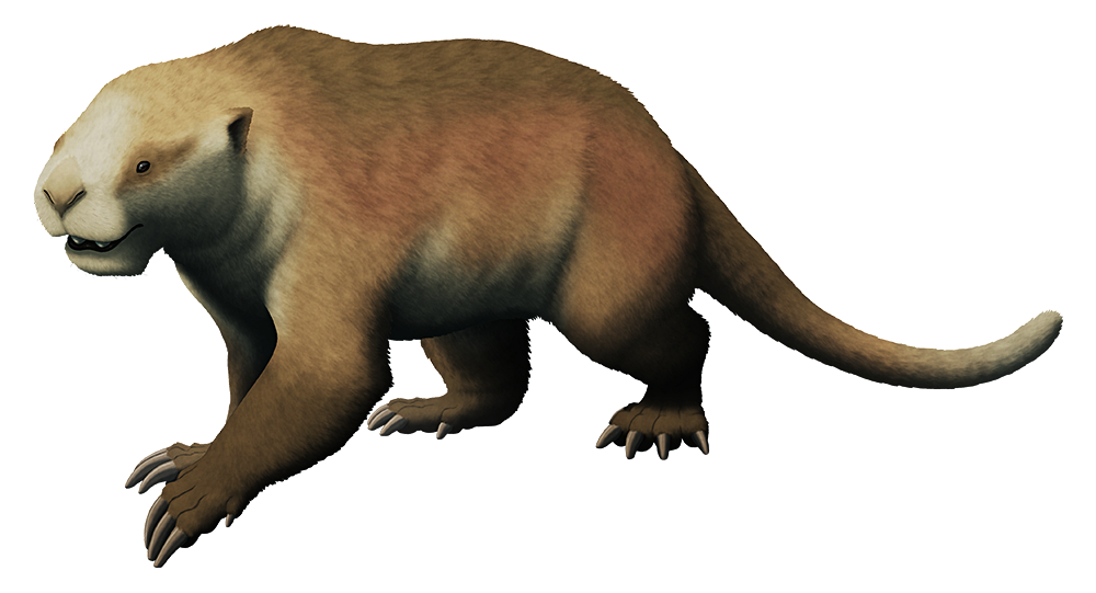 An illustration of an extinct non-placental mammal. It has a low-slung body and a short blunt snout that give a it a vague resemblance to a heavily-built cat, with large scythe-like claws on its forelimbs.