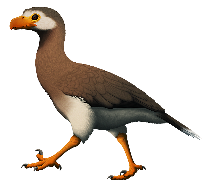 "An illustration of an extinct bird related to modern seriemas, walking along the ground. It has a large hooked beak and raised ""sickle claws"" on its second toes like a dromaeosaurid dinosaur."