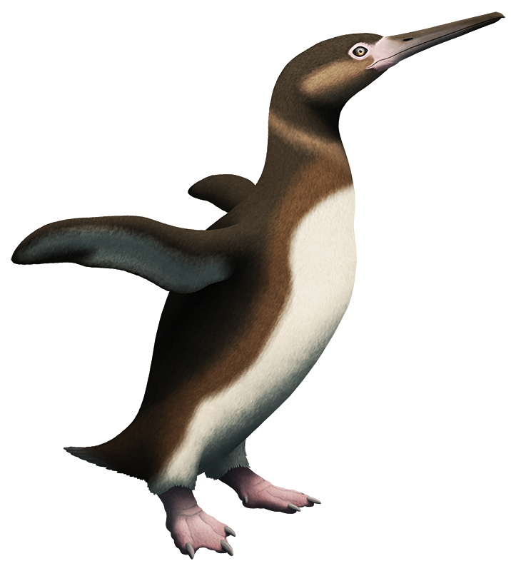 An illustration of an extinct giant penguin. It has a long pointed beak.