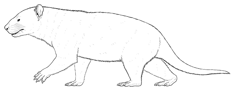 A lineart illustration of an extinct mammal related to marsupials. It's a bear-like animal with a short deep blunt snout, four stocky plantigrade limbs, and a long tail.