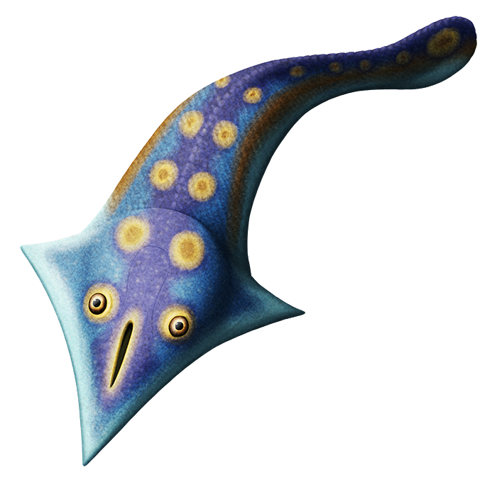 An illustration of an extinct armored fish. It has a pointy kite-shaped head shield with large upwards-facing eyes and a single large vertical slit nostril that resembles a comical mouth. The rest of its body resembles a finless fish with a paddle-shaped tail.