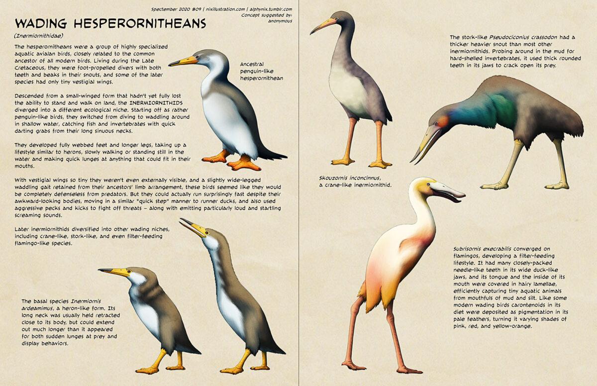 Spectember #09: Wading Hesperornitheans