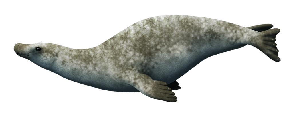 An illustration of an extinct seal. it has an unusually long neck.