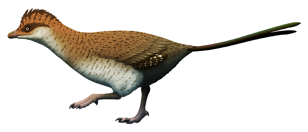 An illustration of an extinct flightless bird. It has a dinosaur-like snout instead of a beak, short wings, sturdy legs, and a pair of long streamer-like feathers instead of a tail fan.