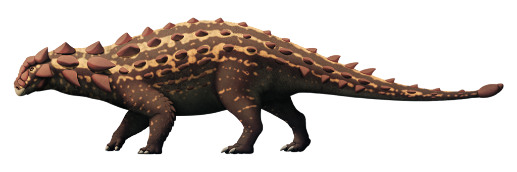 An illustration of an extinct ankylosaur, a type of quadrupedal herbivorous dinosaur. Its body is covered in knobbly spiky armor, and it has a small bony club at the tip of its tail.
