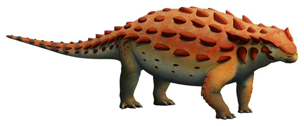 An illustration of an extinct ankylosaur, a type of quadrupedal herbivorous dinosaur. Its body is covered in knobbly spiky armor, but unlike most other ankylosaurids it has no bony club at the tip of its tail.