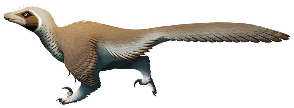 """An illustration of an extinct dromaeosaur, a """"raptor"""" dinosaur. It's fully-feathered and birdlike in appearance, and has a slender snout, large sickle claws on its feet, winglike arms, and a long stiff tail."""