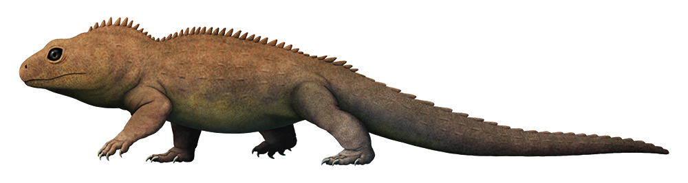 An illustration of an extinct lizard-like reptile. It has a row of short spines down its back, and a proportionally big head with large eyes.